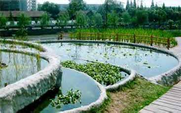 http://www.wellnessgoods.com/images/art_illo_gar_pond.jpg